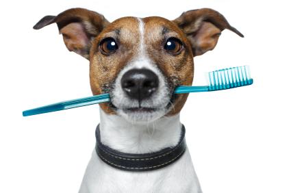 Una buena higiene oral es fundamental para nuestra mascota