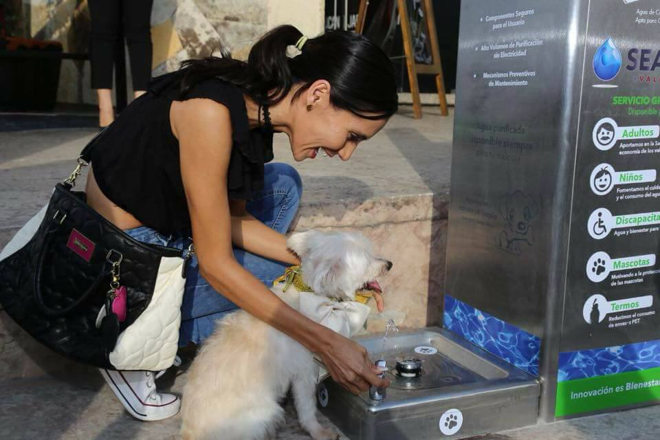 Bebederos para mascotas y discapacitados.